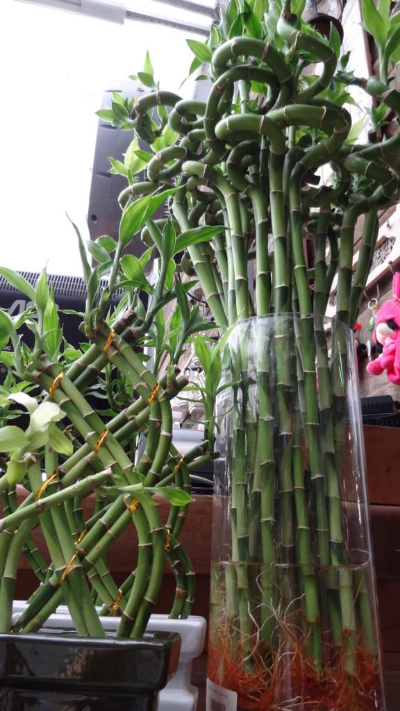 bambu da sorte, blog detalhes magicos