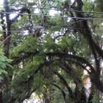 Rua Dinarte Ribeiro no blog Detalhes Magicos