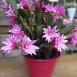 Flor de outubro no blog Detalhes Magicos