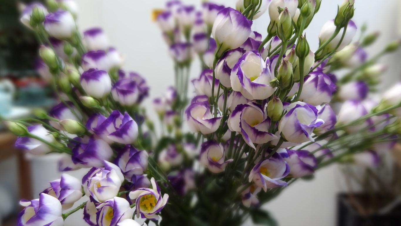 Flores com a cor da virada no blog Detalhes Magicos