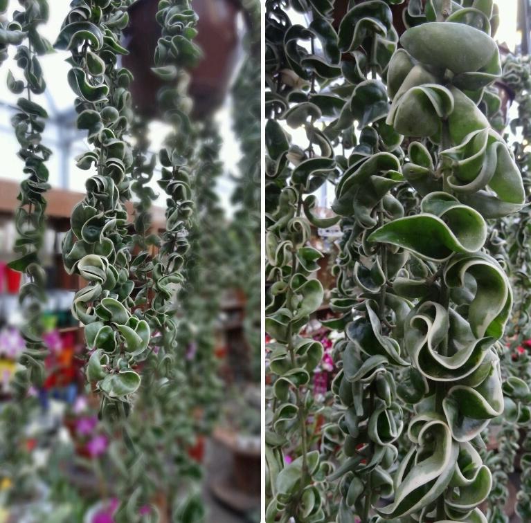 Flor de cera Folhagens pendentes no blog Detalhes Magicos