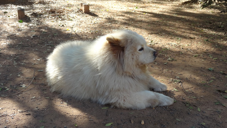 Praça dos cachorros no blog Detalhes Magicos