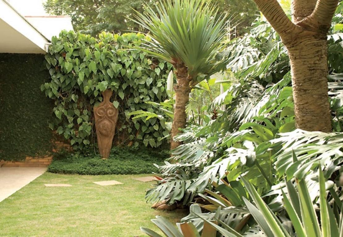 plantas de jardim que gostam de umidade:não gosta de sol. Ela é das florestas e gosta de sombra e umidade