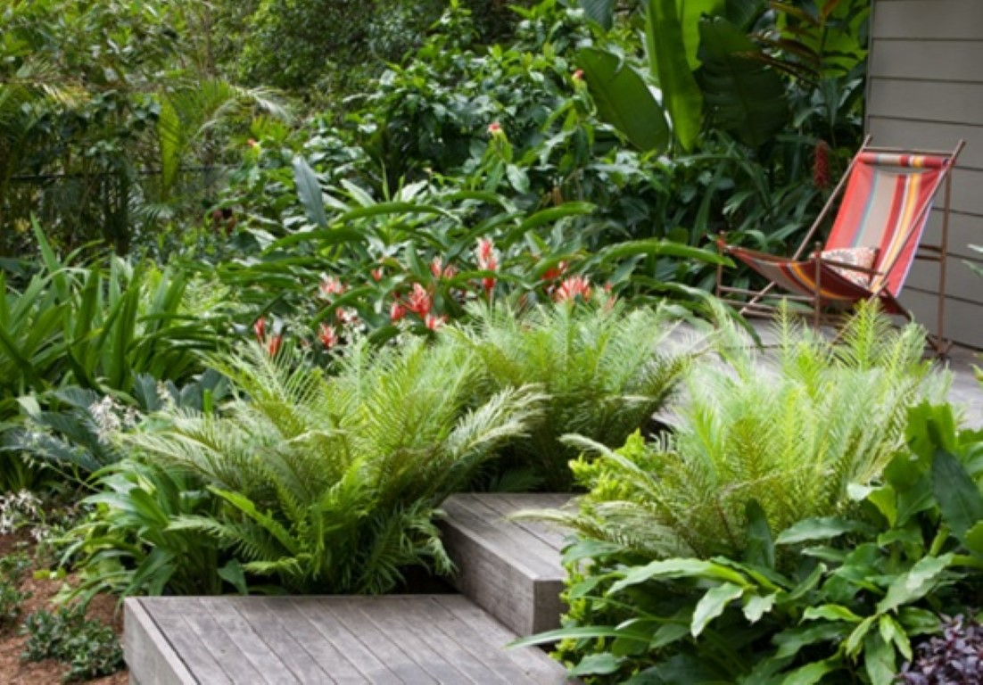 Decorar com samambaia detalhes m gicos for Garden bed ideas for front of house australia