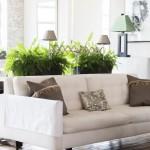 plantas dentro de casa no blog Detalhes Magicos