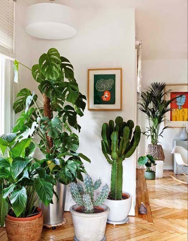 plantas-dentro-de-casa-um-jardim-particular